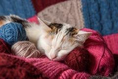 Um gato está em uma manta Fotografia de Stock