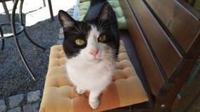 Um gato est? olhando fixamente intensamente fotos de stock royalty free
