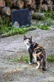 Um gato fêmea tricolor mia perto da lenha empilhada fotografia de stock