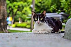 Um gato impertinente no parque de Lumphini em Banguecoque imagem de stock royalty free