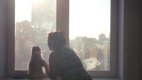 Um gato macio bonito senta-se em seus pés traseiros e danças com uma menina nos fones de ouvido contra o contexto de uma arquitet vídeos de arquivo