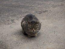 Um gato marrom desabrigado está dormindo na rua fotos de stock royalty free