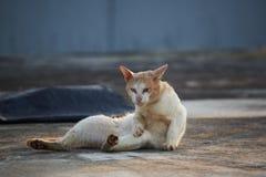 um gato marrom que encontra-se no assoalho imagem de stock royalty free