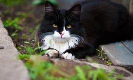 Um gato na caça Foto de Stock