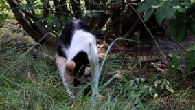 Um gato na natureza vídeos de arquivo