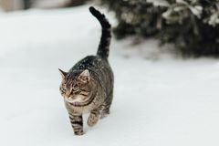 Um gato na neve Fotos de Stock