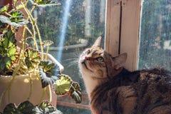 Um gato no balcão imagens de stock royalty free
