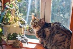 Um gato no balcão imagem de stock