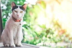 Um gato no fundo da natureza com espaço da cópia imagens de stock