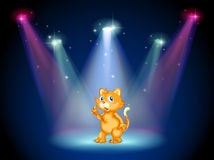 Um gato no meio da fase sob os projetores Fotos de Stock Royalty Free