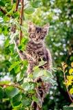 Um gato novo, listrado, agitado senta-se em um branch_ da árvore imagem de stock royalty free