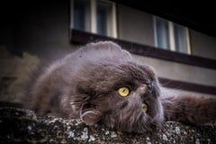 Um gato peluches Imagens de Stock