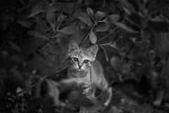 Um gato pequeno Fotografia de Stock Royalty Free