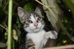 Um gato pequeno Imagens de Stock