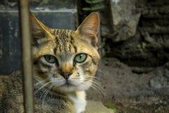 Um gato pequeno bonito, gato do amor, fim acima Fotos de Stock Royalty Free