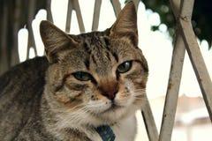 Um gato pequeno bonito, gato do amor, fim acima Imagens de Stock Royalty Free