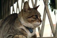 Um gato pequeno bonito, gato do amor, fim acima Imagens de Stock