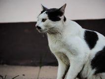 Um gato pequeno do gato Fotos de Stock Royalty Free