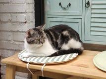 Um gato preguiçoso fotografia de stock royalty free