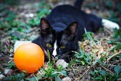 Um gato preto Imagens de Stock