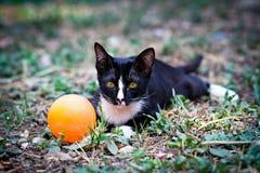 Um gato preto Imagens de Stock Royalty Free