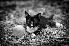 Um gato preto Imagem de Stock