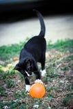 Um gato preto Fotografia de Stock