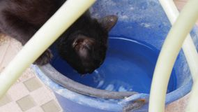 Um gato preto bebe a água de uma cubeta azul velha closeup 4K video estoque