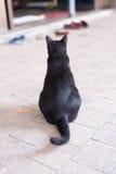 Um gato preto desabrigado vagueia em torno da rua Fotografia de Stock