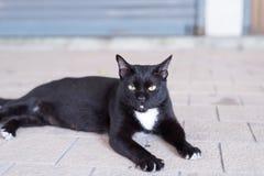 Um gato preto desabrigado vagueia em torno da rua Foto de Stock