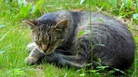 Um gato preto e branco agradável que senta-se em um gramado verde no verão no slo-mo video estoque