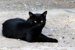 Um gato preto encontra-se em uma areia cinzenta Fotos de Stock