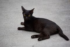 Um gato preto que encontra-se na rua imagem de stock royalty free
