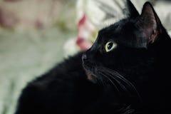 Um gato preto que encontra-se para baixo em sua cama imagens de stock