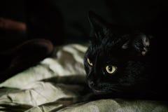 Um gato preto que encontra-se para baixo em sua cama imagem de stock royalty free