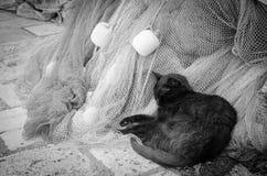 Um gato preto que senta-se em redes de pesca pesca com arrastão imagem de stock