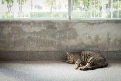 Um gato que dorme ao lado das janelas Imagem de Stock