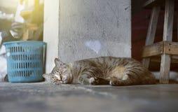 Um gato que dorme em um assoalho, gato do sono, foco seletivo, imagem filtrada, efeito da luz adicionado foto de stock