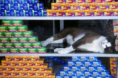 Um gato que dorme em uma exposição da janela Fotografia de Stock Royalty Free