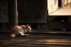 Um gato que dorme no assoalho e na luz solar na manhã imagens de stock