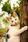 Um gato que empoleira-se em uma árvore Imagem de Stock Royalty Free