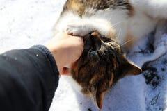 Um gato que encontra-se na terra coberta pela neve e pela mão bitting Fotografia de Stock Royalty Free