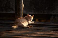 Um gato que encontra-se no assoalho de madeira imagem de stock