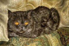 Um gato que encontra-se no sofá imagens de stock