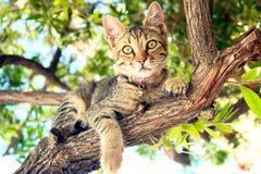 Um gato que senta-se em uma árvore imagens de stock royalty free