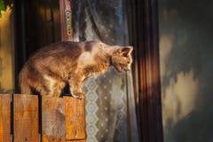 Um gato ruivo que senta-se em uma cerca de madeira Cores em máscaras marrons foto de stock royalty free