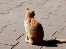 Um gato só Fotos de Stock Royalty Free