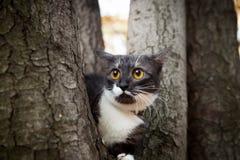 Um gato scared em uma árvore imagem de stock