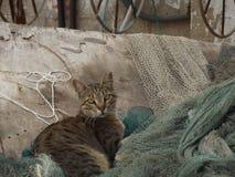 Um gato sentado em redes de pesca Fotografia de Stock