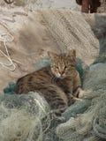Um gato sentado em redes de pesca Imagem de Stock